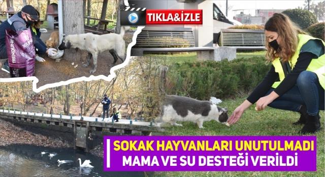 Balıkesir Sokak Hayvanlarını Mamasız bırakmadı